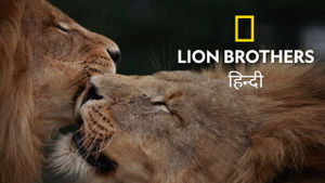 Lion Brothers: Cubs To Kings