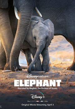 Best Animal Movies on Hotstar