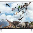 Compare Kevin 55 ইঞ্চি Smart 4K LED TV  vs ফিলিপ্স 43 ইঞ্চি Full HD LED TV