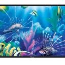 Compare Mitashi 24 inches HD Ready LED TV vs T Series 32 inches HD LED TV