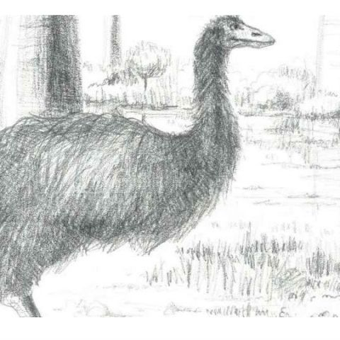 It's official: researchers name Vorombe titan the world's largest bird
