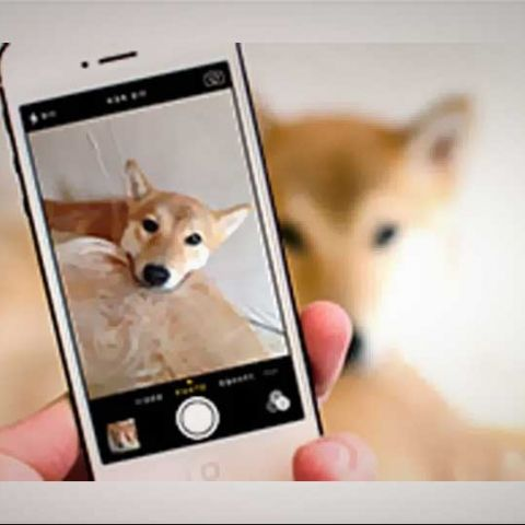 How to use the camera app and get great photographs in iOS7