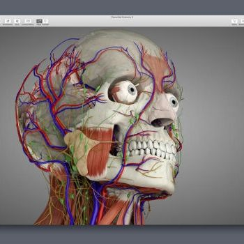 A Better View of the Layers Within: Optimizing Essential Anatomy