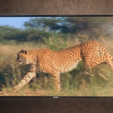 Intex Technologies launches five Next-Gen Android TVs
