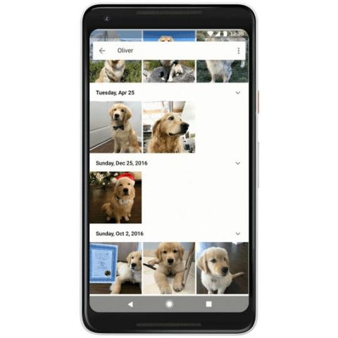 Google Photos can now recognise your pets